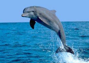 Dünyanın ən yaşlı delfini öldü