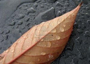 Yağış yağacaq, hava soyuyacaq