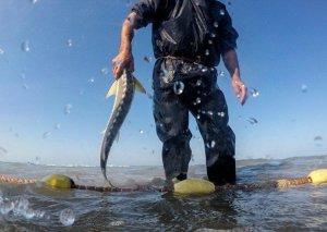 İranlı rəsmi: Xəzər dənizində qanunsuz balıq ovunun başlıca səbəbi işsizlikdir