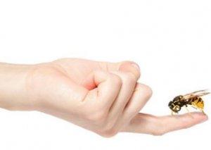 Arı sancmaları zamanı nə etməli?