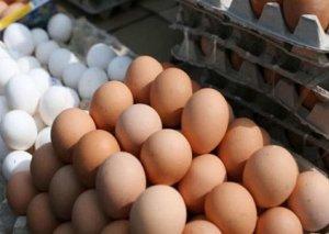 Yumurta qıtlığının səbəbləri