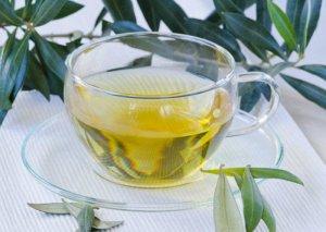 Zeytun yarpağından hazırlanan çayın müalicəvi gücü