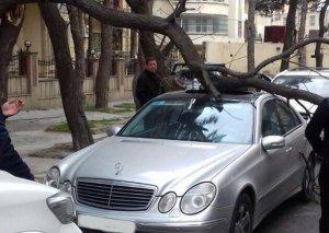 Küləkli hava şəraiti ilə bağlı sürücülərə XƏBƏRDARLIQ