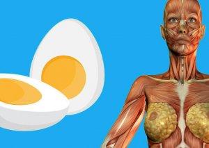 Yumurtanın faydaları ilə bağlı MARAQLI FAKTLAR