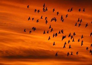 Son 50-100 il ərzində Azərbaycana qışlamaq üçün gələn quşların sayı azalıb