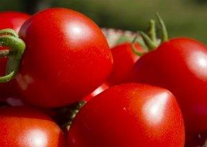 Soğan ucuzlaşdı, indi pomidor bahalaşdı
