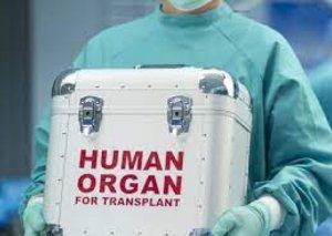 Xəstəxanalarda transplantasiya üzrə koordinatora dair tələblər müəyyənləşib