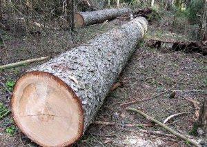 Mərdəkanda vəzifəli şəxslər tərəfindən ağaclar kəsilib, cinayət işi açıldı