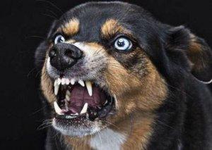 Sumqayıtdakı it dişləyən 5 yaşlı qız quduzluqdan ölüb