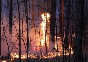 Hindistanda meşə yanğınlarında 9 turist yanaraq ölub