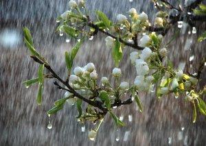 Şimşək çaxacaq,yağış yağacaq
