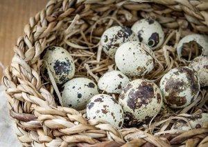 Sonsuzluğun çarəsi olan bildirçin yumurtasının İNANILMAZ FAYDALARI