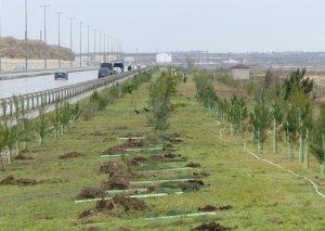 ETSN: Kəsilən ağacların yerində yeni ağaclar əkiləcək