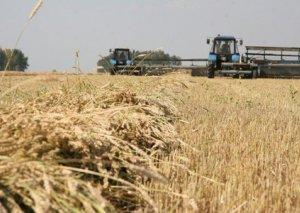 Azərbaycanda aqrar sektor 9% böyüyüb