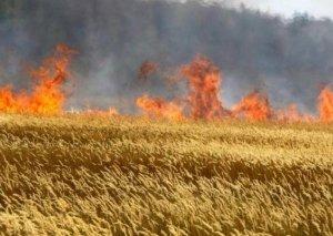 Göyçayda 100 ha taxıl sahəsi yanıb