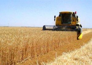 Azərbaycanda 3 milyon tona yaxın taxıl istehsal olunub