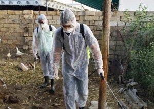 Bakı, Salyan, Hacıqabul və Saatlıda yerləşən təsərrüfatlarda dezinfeksiya tədbirləri aparılır
